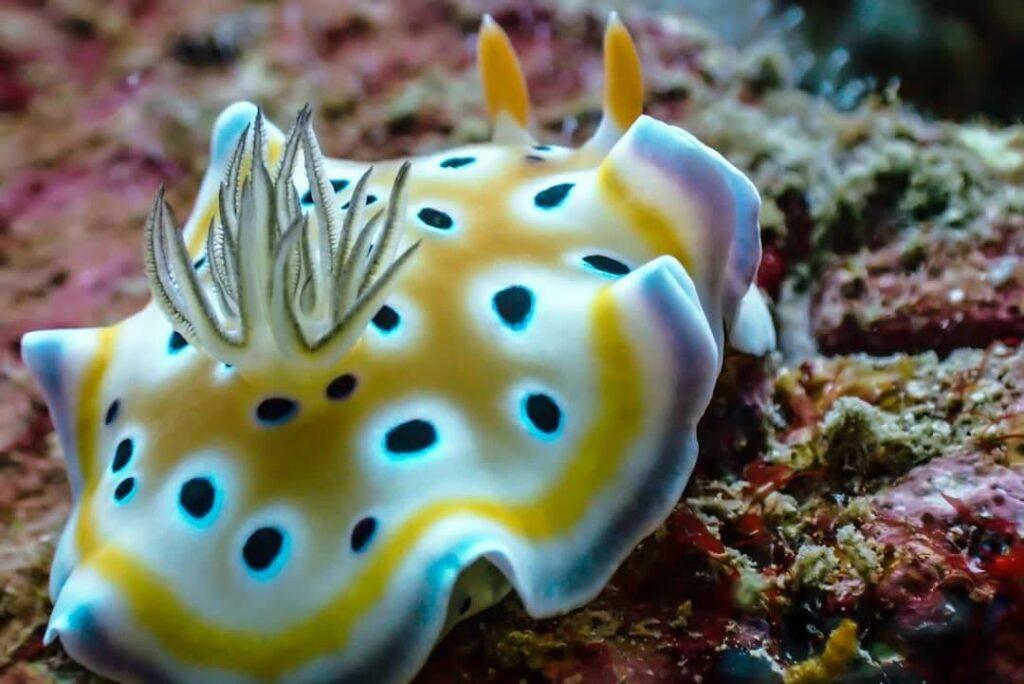 A colorful nudibranch sits on a coral reef at Bida Nai dive site